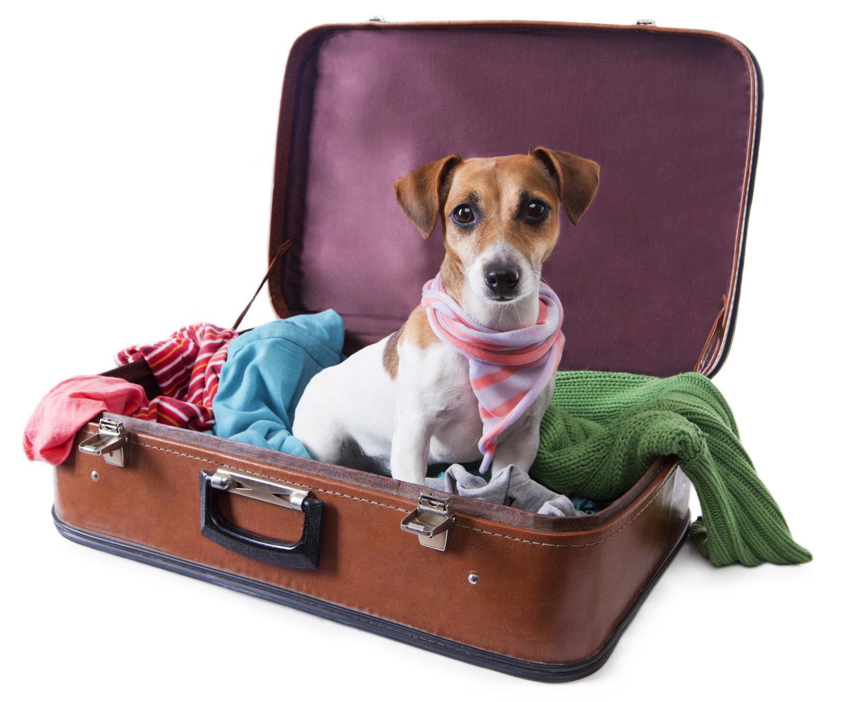 Vacanze-con-animali-cilento.jpg